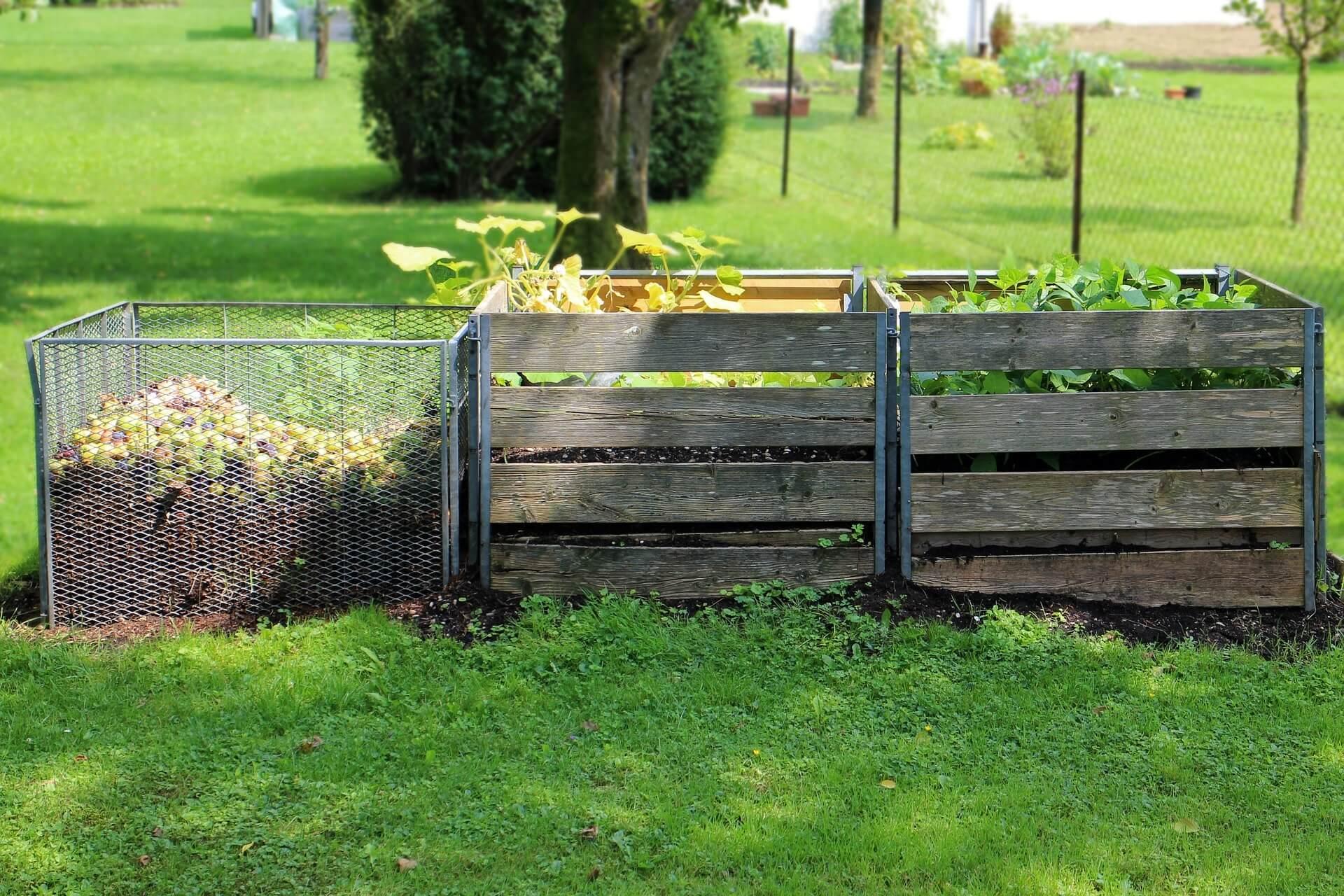 Compost in backyard