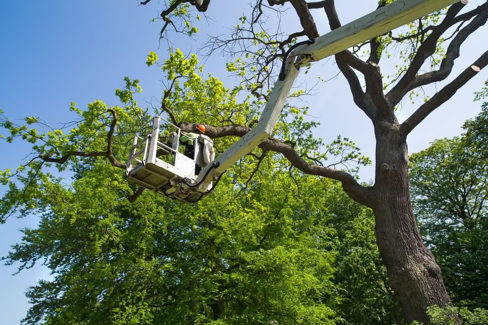 An arborist up in a crane assessing trees before building a home